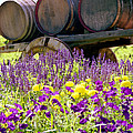 Wine Barrels At V. Sattui Napa Valley by Michelle Constantine