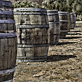 Wine Barrels by Donna Miller
