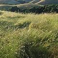 Wine Country Hills by Stu Shepherd