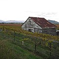 Wine Country by Nancy Worrell