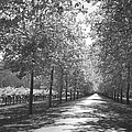 Wine Country Napa Black And White by Suzanne Gaff