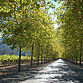 Wine Country Napa by Suzanne Gaff