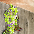 Wine On The Vine by Rich Stedman