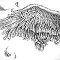Wing by Adam Zebediah Joseph