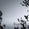 Wing Stretch by Robi Castaneda
