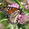 Winged Beauty by Brenda Ketch