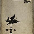 Wings by Bill Jonas