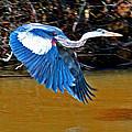 Wings In Flight by Joseph Coulombe