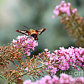 Wings In The Flowers by Kerri Farley