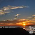 Wings Of A Bird by Milton Elliott