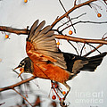 Wings Of A Robin by Nava Thompson