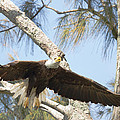 Wings Of An Eagle by Doug McPherson