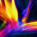 Wings Of Color Abstract  by Eric  Schiabor