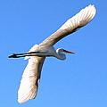 Wings On High by Zanda  K Gutek
