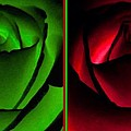 Winsome Roses Pair by Will Borden