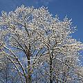 Winter 1 by Staci  AJello