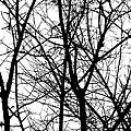 Winter 15 by Mauricio Jimenez