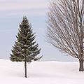Winter 2015 by Jim Walker