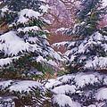 Winter  5 by Dave Dresser