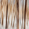 Winter Abstract by Bill Wakeley