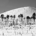 Winter After Fire-san Francisco Peaks by Jeff Brunton