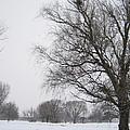 Winter Afternoon 4  2013 by Mick M Brummund