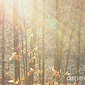 Winter Arbor Light by Joshua Bales