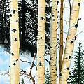 Winter Aspens by Barbara Jewell