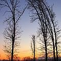 Winter At Dusk by Randy Pollard