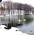 Winter At Oakland Lake by Dora Sofia Caputo Photographic Design and Fine Art