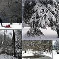 Winter At Petrifying Springs Park by Kay Novy