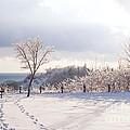 Winter At Scarborough Bluffs by Elena Elisseeva