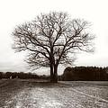 Winter Bare by David Stone