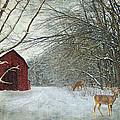 Winter Barn by Lianne Schneider