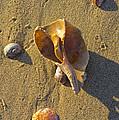 Winter Beach by Joe Geraci