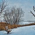 Winter Bench At Walnut Creek Lake by Nikolyn McDonald