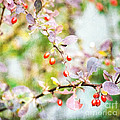 Winter Berries by Christian LeBlanc