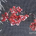 Winter Berries II by Karin Everhart