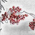 Winter Berries  by Karin Everhart