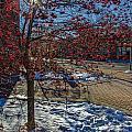 Winter Berries by Baywest Imaging