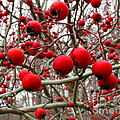 Winter Berryscape by Joshua Bales