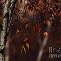 Winter Birch by Linda Shafer