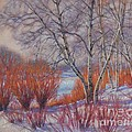 Winter Birches And Red Willows 1 by Fiona Craig