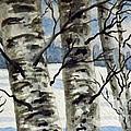 Winter Birches by Brenda Brown