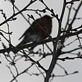 Winter Bird by LeLa Becker