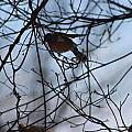 Winter Birds 2 by Stephen Connelly