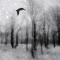 Winter Bliss by Gothicrow Images