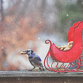 Winter Blue Jay #2 by Pat Abbott