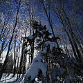 Winter Blue by Karol Livote