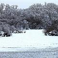 Winter Blues by Debbie Hart